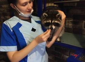 Ветеринария=любовь