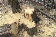Резка вырезка Деревьев профи